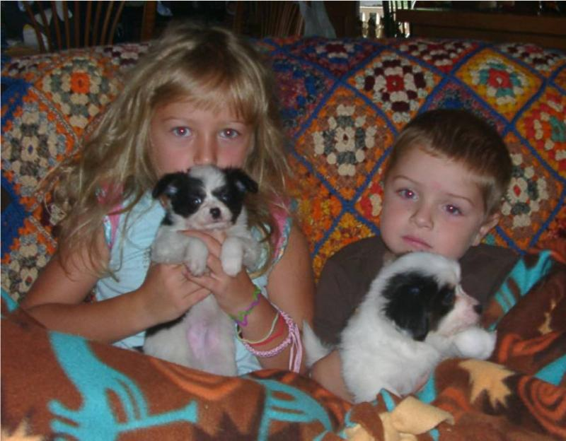 our socialized pups with grandkids